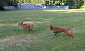 blog dog chasing Finn