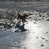 blog dog spring at the beach