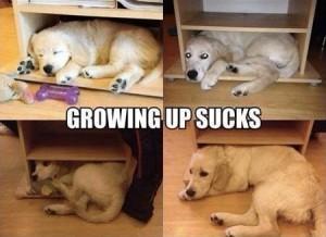 blogdog friend grows up