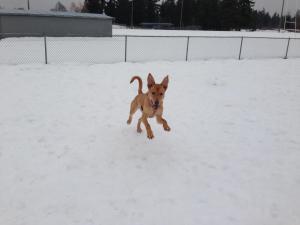 Finn in the snow